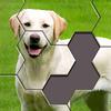 Hexa Jigsaw Puzzle™